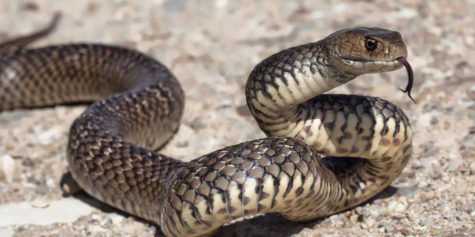 jasa pembasmi ular