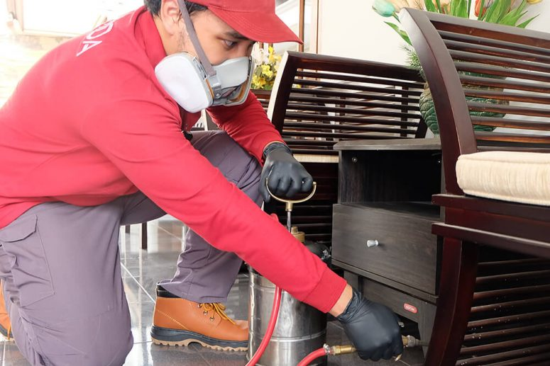 Jasa Pembasmi Semut di Bogor