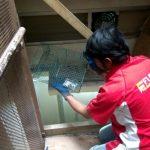 Jasa Pembasmi Tikus di Jakarta