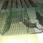 Jasa Pembasmi Tikus di Batam