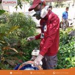 Jasa Pembasmi Rayap di Probolinggo Jawa Timur
