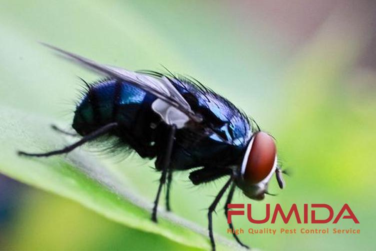 11 Cara Ampuh Membasmi Lalat Di Rumah