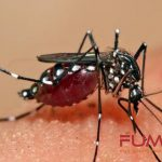 22 Cara Membasmi Nyamuk Paling efektif