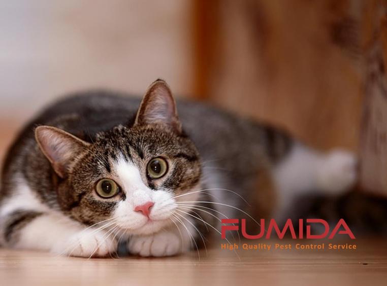 8 Cara Ampuh Membasmi Kucing Di Rumah