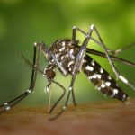5 Pengusir Nyamuk Paling Ampuh dari Bahan Alami
