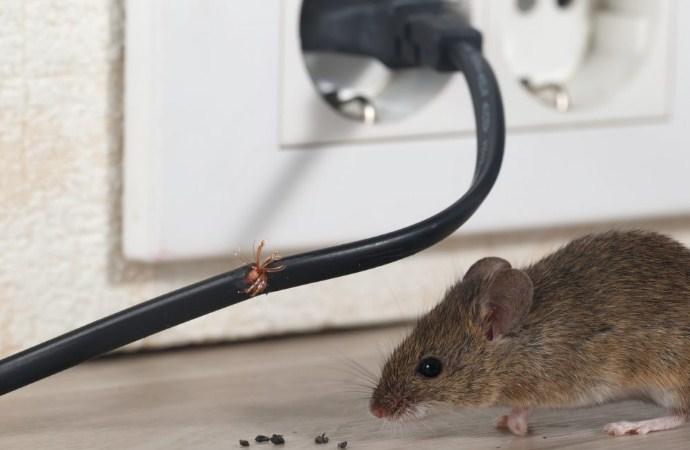 Pest Control Tikus Terbaik