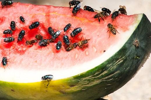 Gambar Cara Menghilangkan Lalat di Warung