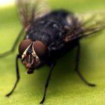 21 Cara Mengusir Lalat dari Rumah Sesuai Kapasitasnya