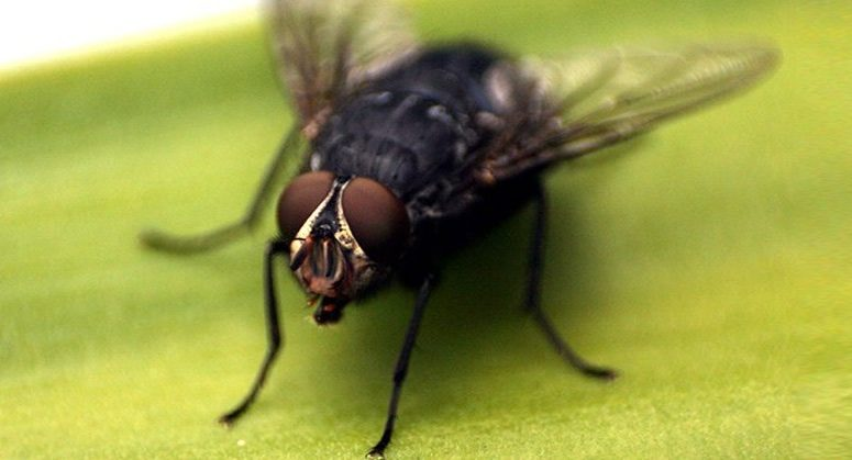 Gambar Cara Mengusir Lalat