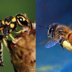 11 Perbedaan Tawon dan Lebah yang Harus Anda Tahu!