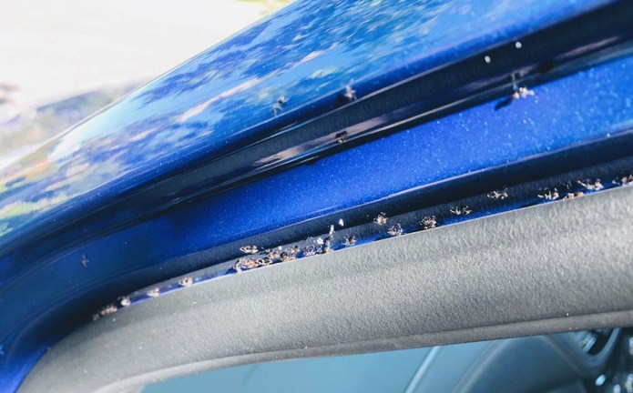 Gambar cara menghilangkan semut di mobil