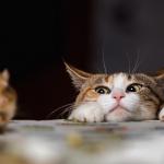 Mau Tahu Tikus Takut dengan Apa? Ini Cara Mengusirnya!