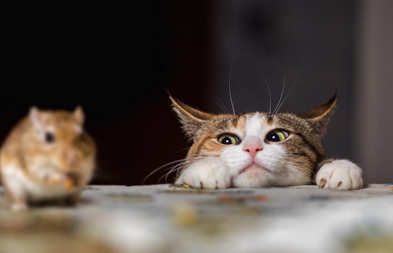 Tikus takut dengan apa, kucing