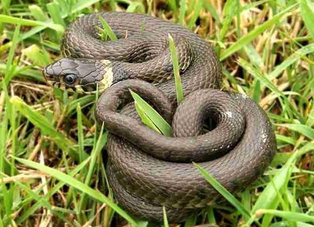 Gambar cara mengusir ular dari kebun