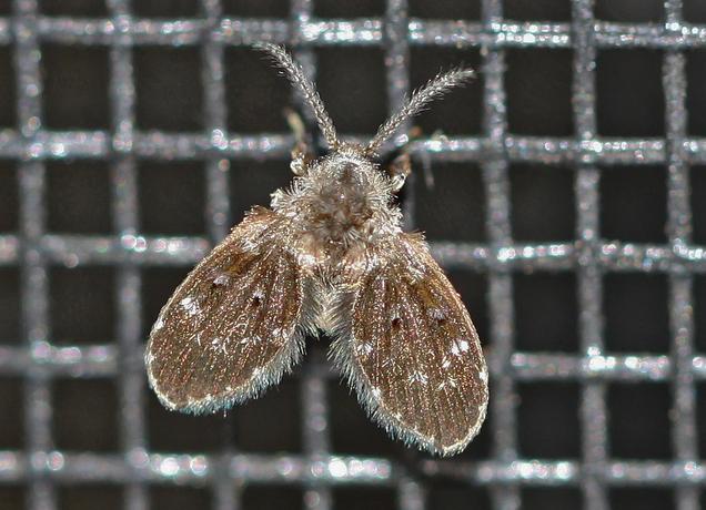 Gambar obat lalat kamar mandi