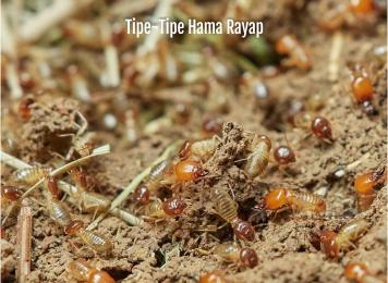 tipe-tipe hama rayap