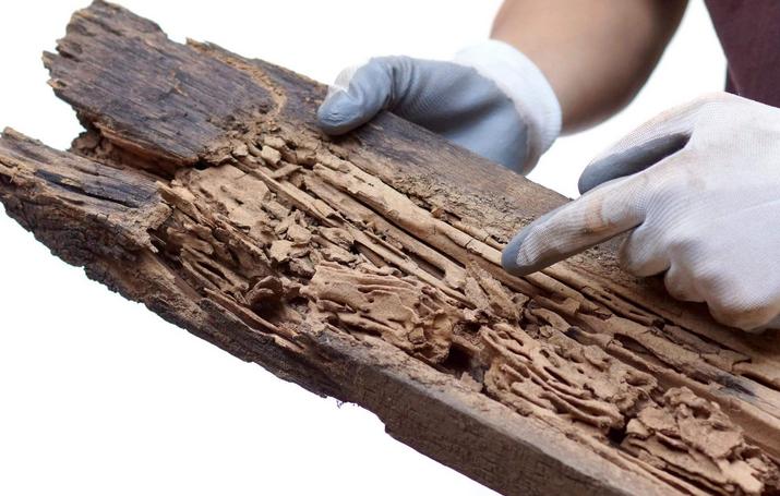 Cara menghilangkan rayap di kayu