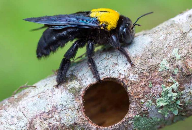 Gambar 1 - Beberapa jenis dan ciri sarang lebah