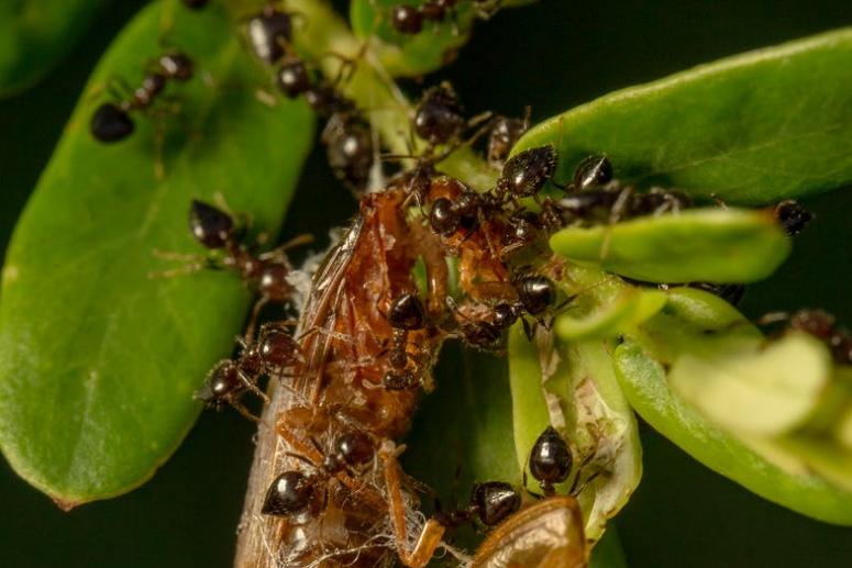 Gambar 1 - Jenis makanan semut yang harus Anda tahu