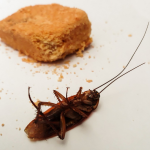 Kecoa Terbalik dan Mati? Ini Alasan dan Cara Membunuhnya