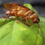 Jangan Khawatir Dengan Kecoa, Ikuti Cara Ini Untuk Mengusir Kecoa di Kamar Mandi