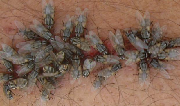Gambar 2 - Faktor yang mempengaruhi siklus hidup lalat
