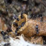 8 Cara Membasmi Lebah Yang Bersarang Di Rumah