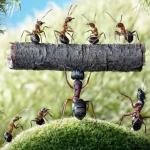 Jenis Serangga di Rumah yang Bahaya: Ciri & Tips Membasmi