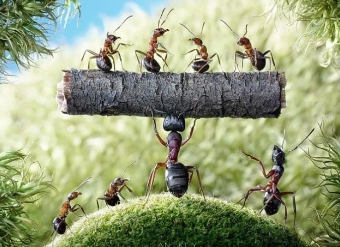 Gambar 2 - Klasifikasi serangga yang merugikan dan tidak terbang
