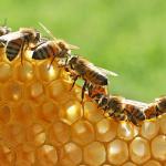 Sarang Lebah: Jenis, Produk, Manfaat, dan Ciri-cirinya