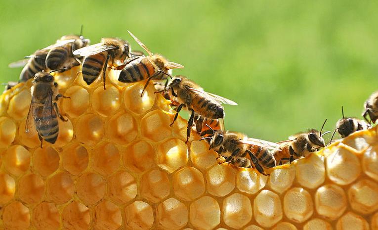 Gambar 2 - Sekilas tentang sarang lebah madu