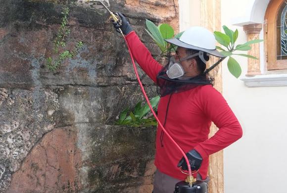 Cara membasmi lebah dengan cepat dan tepat