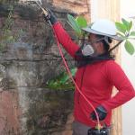 Jasa Pembasmi Tawon di Batam