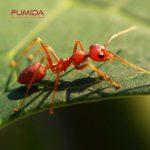 Jenis-jenis Semut yang Sering Kita Jumpai