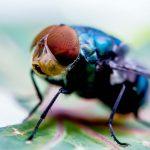 Cara Membasmi Lalat di Rumah Tanpa Ribet