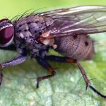 Trik Sederhana Ini Dapat Menghilangkan Lalat Kecil di Kamar Mandi