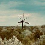 Aman Dan Mudah Membuat Obat Nyamuk Dengan Bahan Alami