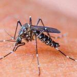 3 Cara Mengusir Nyamuk Secara Alami Tanpa Ribet