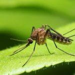 Solusi Jitu Cara Mudah Menghilangkan Nyamuk Di Rumah