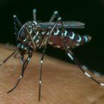 Cukup Lakukan Ini Untuk Mengusir Nyamuk Secara Alami!