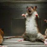 5 Trik Ampuh Cara Mengusir Tikus Di Mesin Mobil