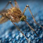 Langkah Aman Membuat Semprotan Nyamuk Demam Berdarah
