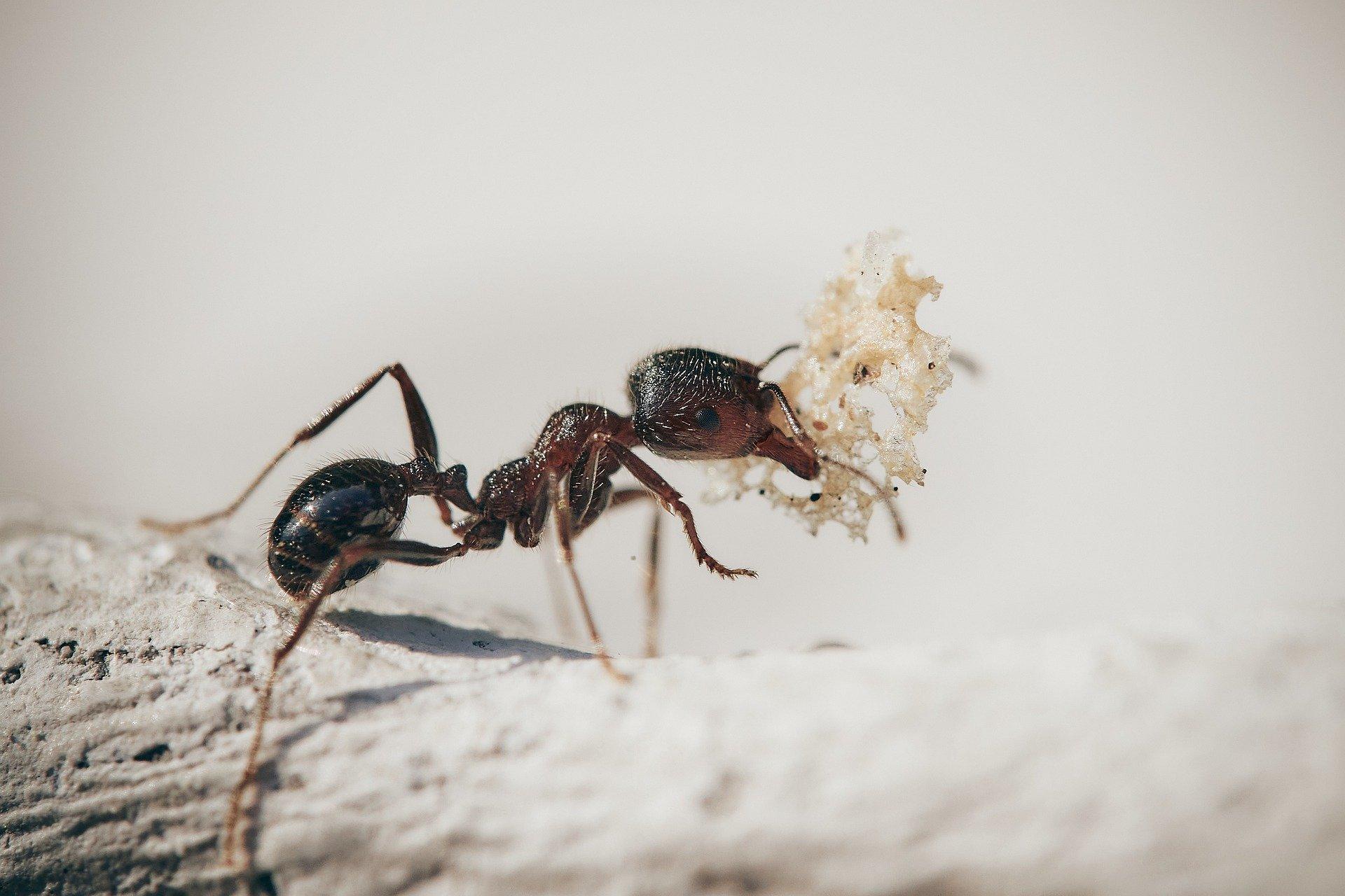 Cara Mengusir Semut di Rumah yang Efektif