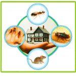 5 Jenis Hama yang Sering Muncul di Rumah, Mana Paling Merugikan ?
