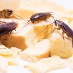 6 Alasan Mengapa Kecoa Berkeliaran di Dapur dan Hinggap di Makanan