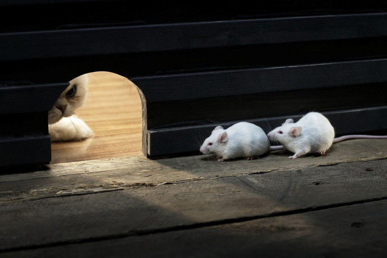 Cegah Tikus Masuk Ke Rumah