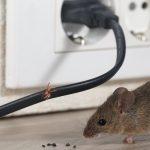 Patut Waspada! 6 Jenis Hama Masuk Rumah Ini Dapat Membahayakan Kesehatan Anda