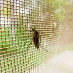 Ampuh Dan Praktis, Yuk Intip 5 Cara Mencegah Nyamuk Masuk Dalam Rumah