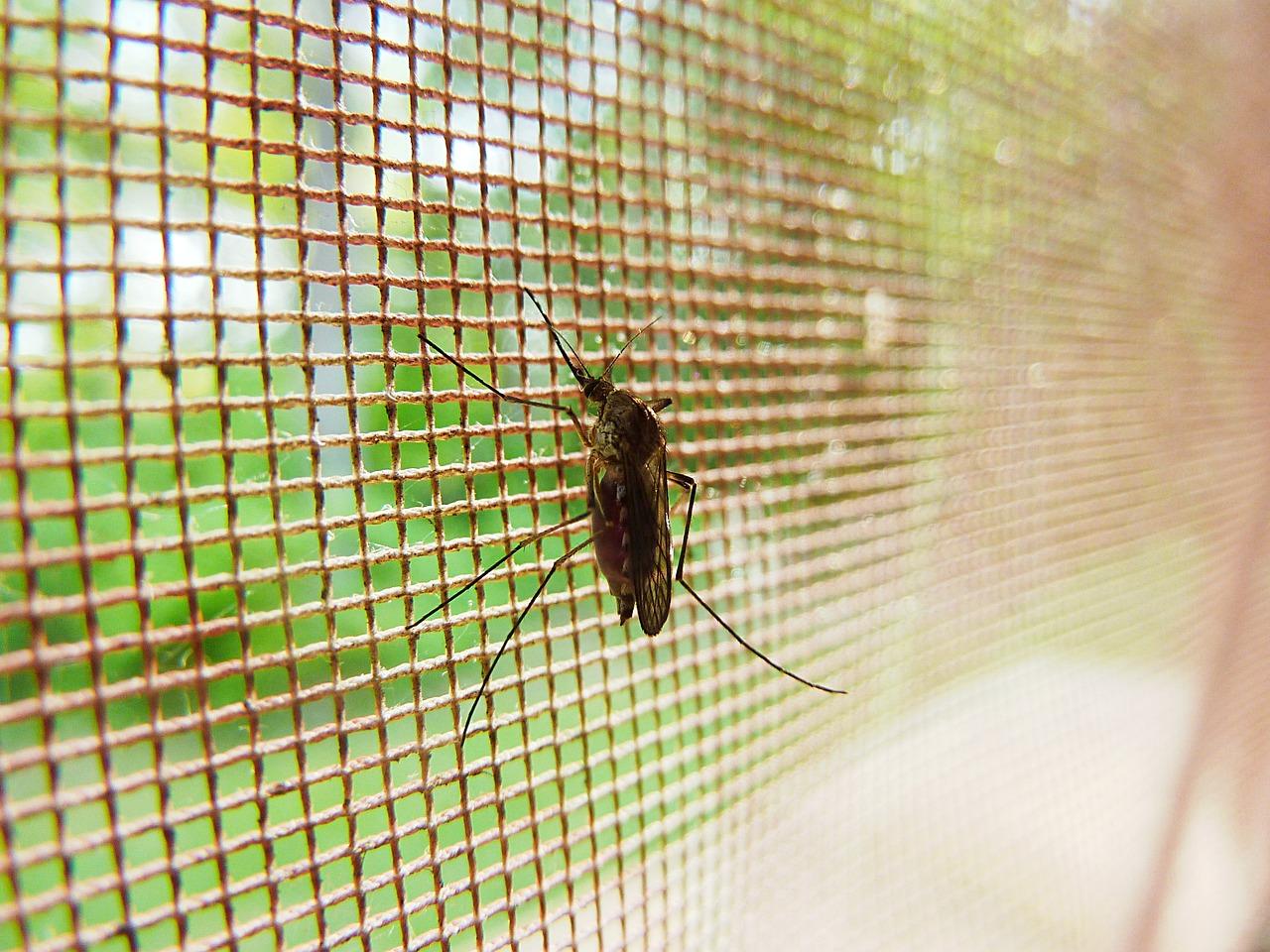 Cara Mencegah Nyamuk Masuk Dalam Rumah