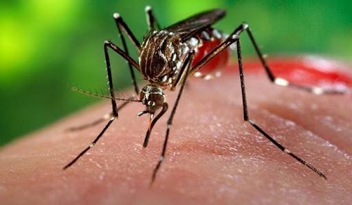 Jenis Nyamuk Berbahaya Bagi Kesehatan